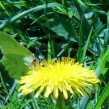 Profile picture for user Viola